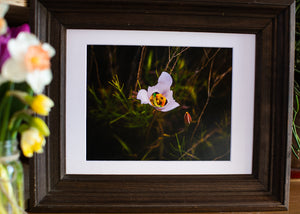 Photograph w/ Frame - Sego Lily Feast – Utah State Flower