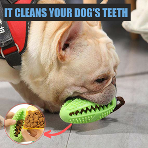 Bristly™ 2-In-1 Dog Toothbrush - Sparbi.com