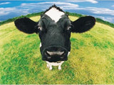Diamond Painting Cow  Kit