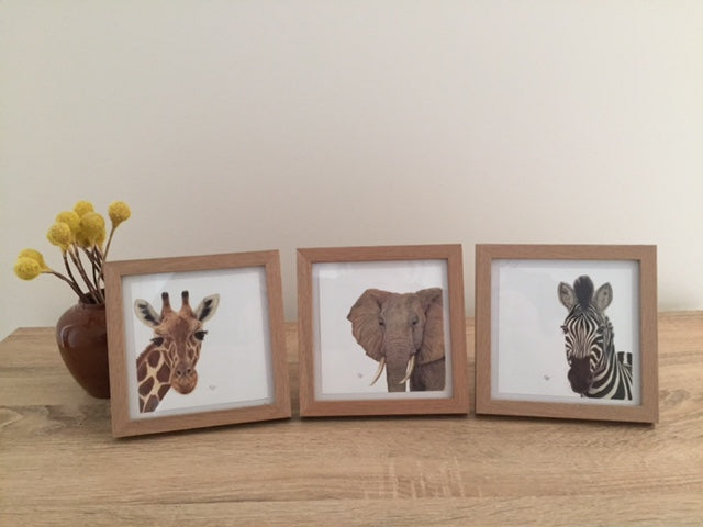 African Favourites Framed Set