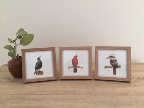 Australian Birds Framed Set