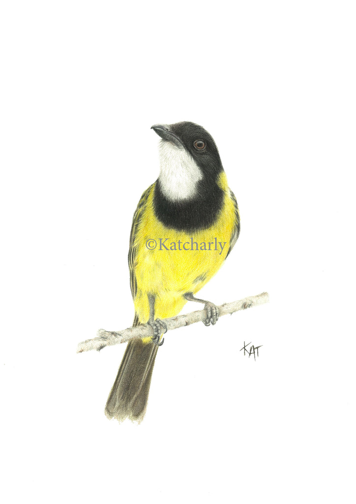 Golden Whistler Original