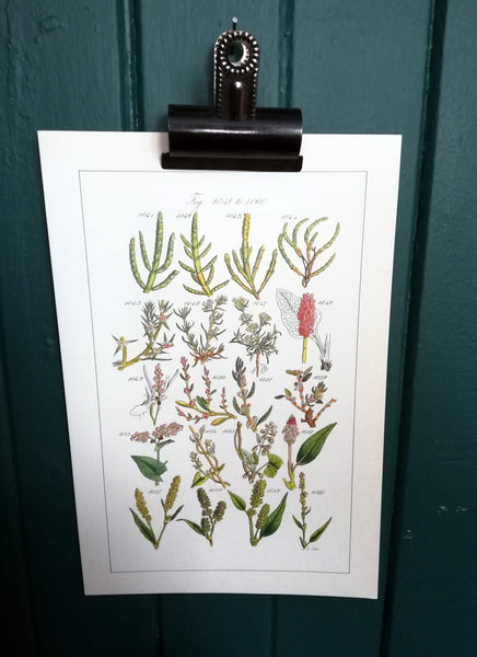 Vintage original botanical  book illustration prints
