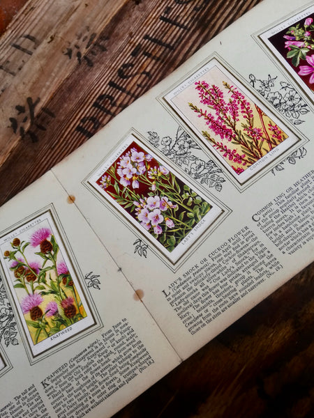Gorgeous vintage cigarette card book - Wildflowers