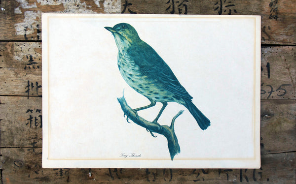 Vintage original botanical British bird book illustration prints song thrush