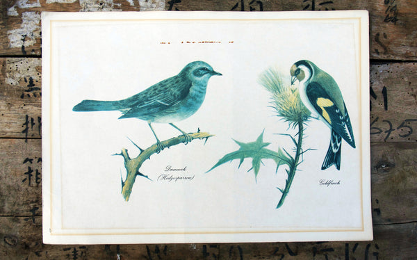 Vintage original botanical British bird book illustration prints dunnock and goldfinch