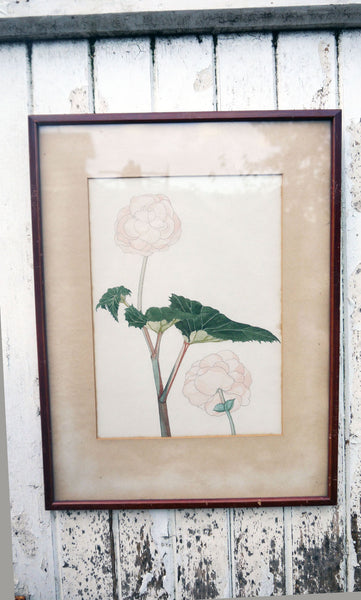 vintage botanical flower art prints hydreangea