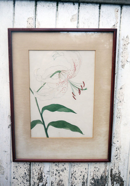 vintage botanical flower art prints lilly