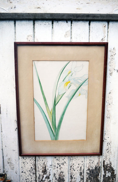 vintage botanical flower art prints Iris