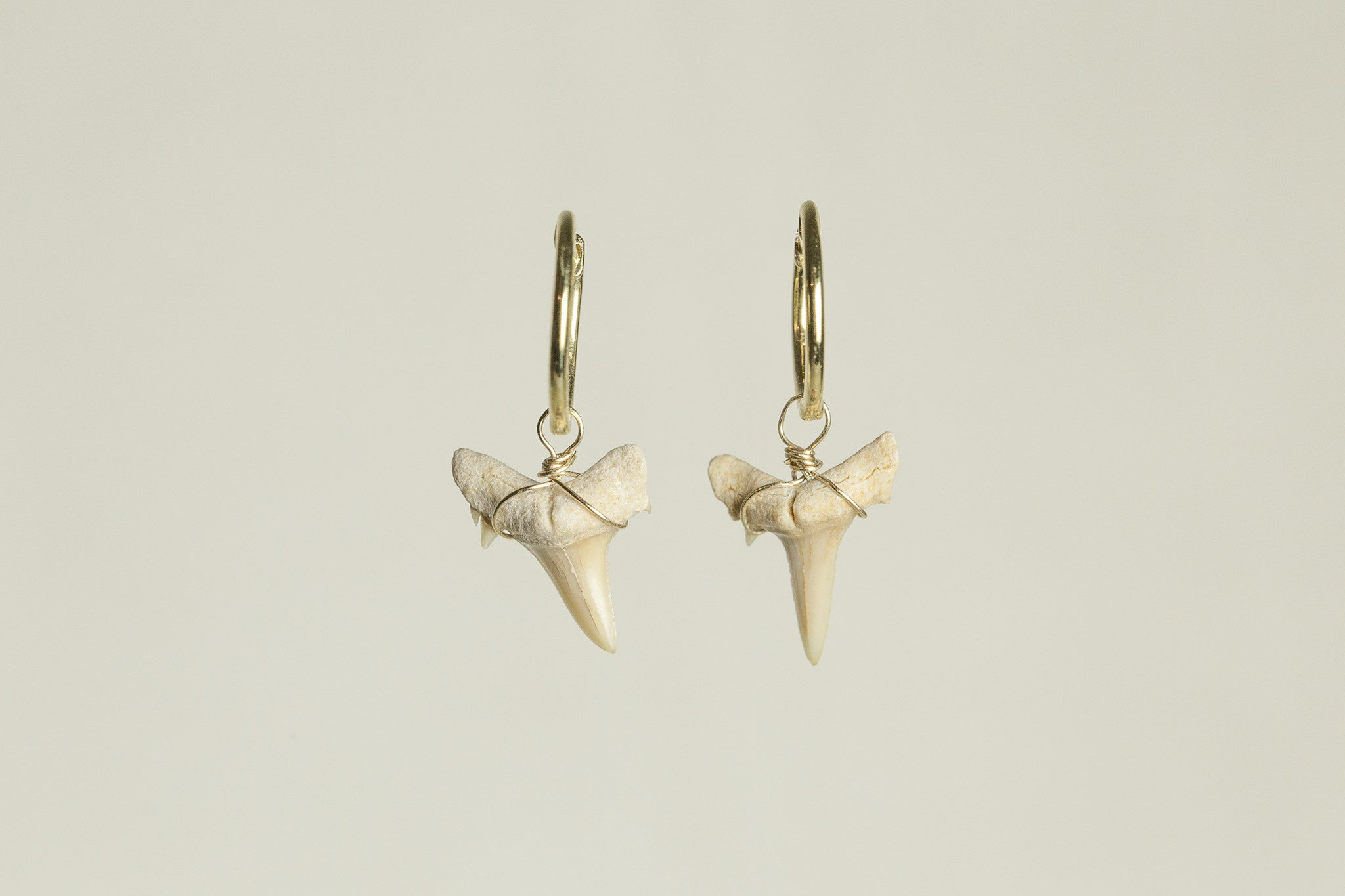 incredibly desirable shark tooth earrings