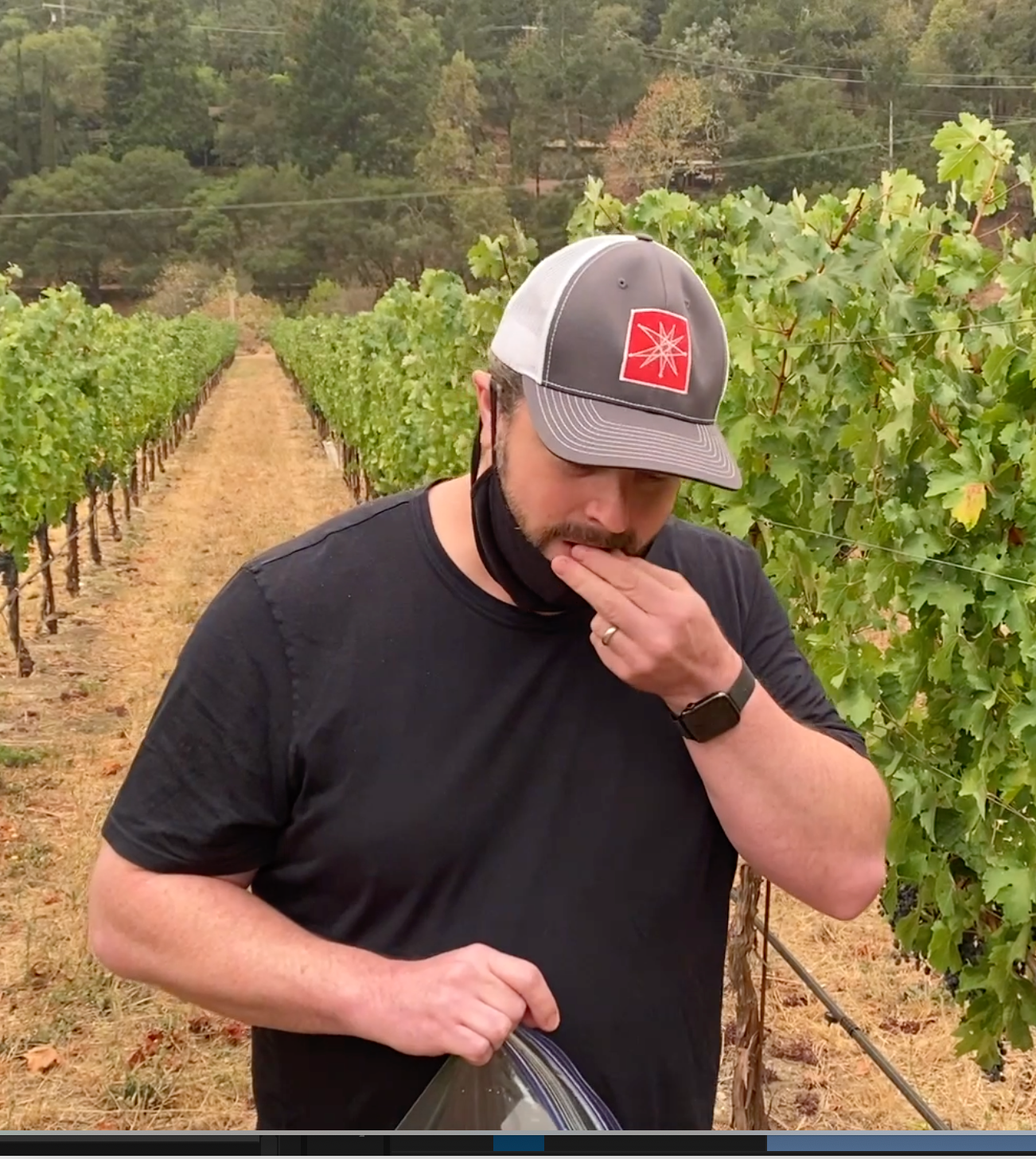 How We Determine When Our Cabernet Sauvignon Grapes Are Ready to Be Harvested