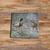 Two Ducks Glass drinks Coaster - The Great British Weather - Kitchy & Co
