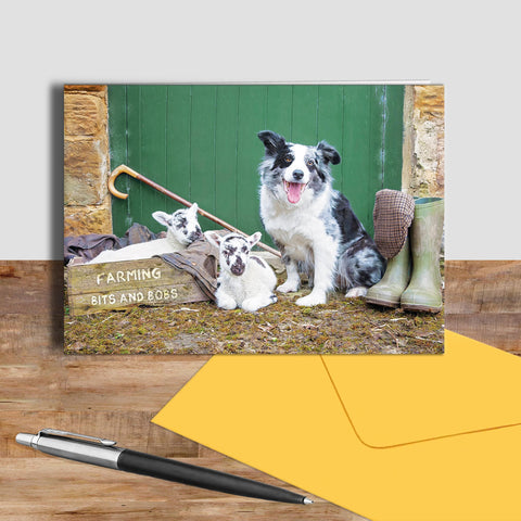Blue merle border collie and lambs greetings card - Farming Bits and Bobs - Kitchy & Co