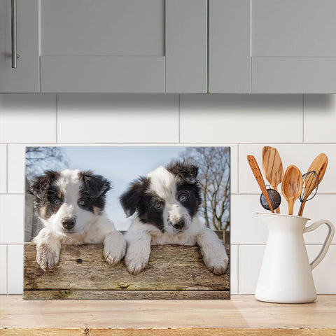 Border Collie Puppies glass chopping board - Just Hanging Out - Kitchy & Co