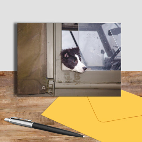 Border collie pup greetings card - Are we nearly there yet ? - Kitchy & Co