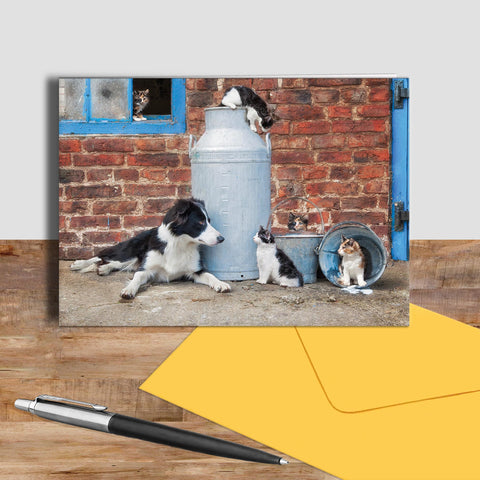 Border collie and farm Cats greetings card - Cats that got the cream - Kitchy & Co