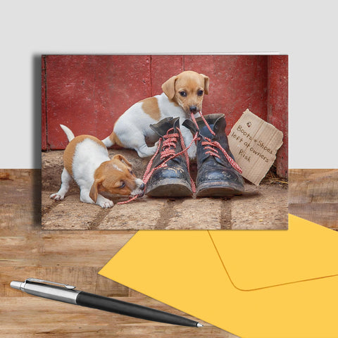 Jack russell puppies greetings card - New laces for old boots - Kitchy & Co
