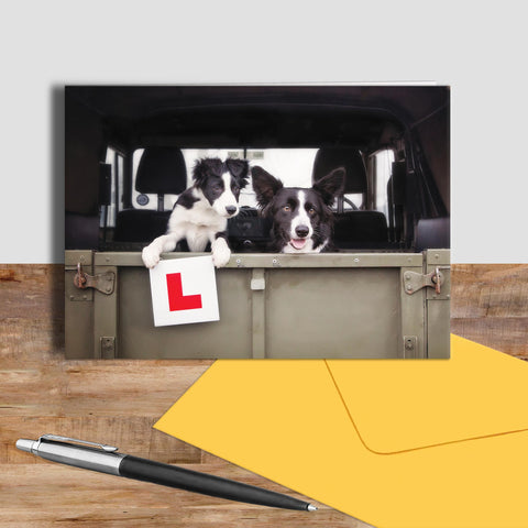 Sheepdog greetings card - Learner Driver - Kitchy & Co