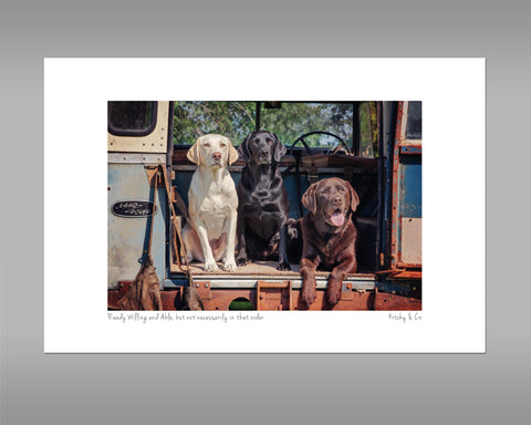 Labrador Print - Ready Willing and Able - Kitchy & Co