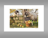 Swaledale Sheep Print - Scrumping Apples - Kitchy & Co