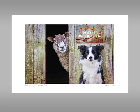 Border Collie and Sheep Print - Look out ! She's behind ewe - Kitchy & Co