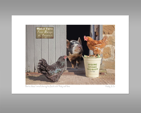 Pig and Hens Print - Bertie shares his lunch - Kitchy & Co