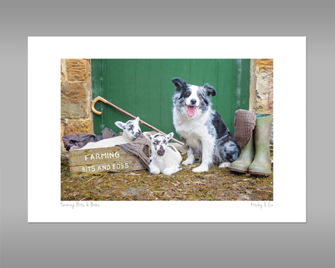 Blue Merle Border Collie Print - Farming Bits and Bobs - Kitchy & Co