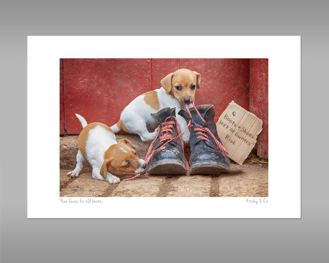 Jack Russell Terrier Pups Print - New laces for Old boots