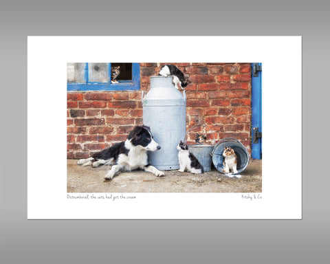 Border Collie and Farm Cats Print - Cats that got the cream - Kitchy & Co