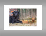 Black Labrador and Ducks Print - Dipping Ducks - Kitchy & Co