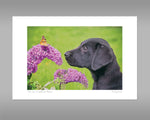 Labrador and Butterfly Print - Take time to smell the flowers - Kitchy & Co