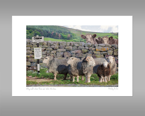 Herdwick Sheep Print - Why walk when ewe can take the bus - Kitchy & Co