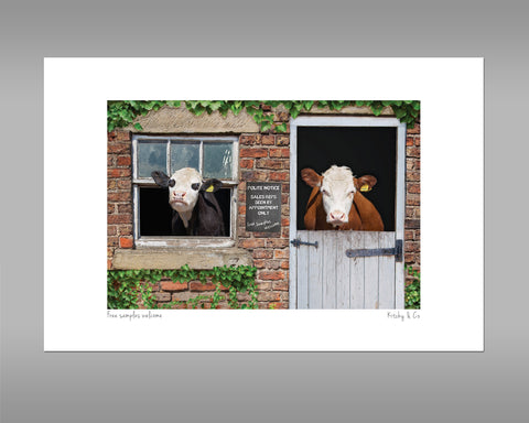 Hereford Cow Print - Free samples welcome - Kitchy & Co