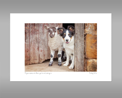 Tri Colour Border Collie Print - If your name's not down - Kitchy & Co