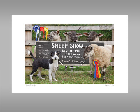 Sheep Show Print - Young Sheep Handler - Kitchy & Co