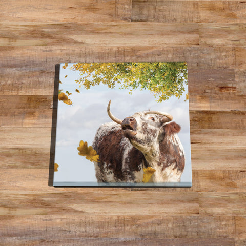 Longhorn cow Glass drinks Coaster - Call of the fall - Kitchy & Co