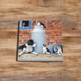 Border collie and Farm cats Glass drinks Coaster - Cats that got the cream - Kitchy & Co