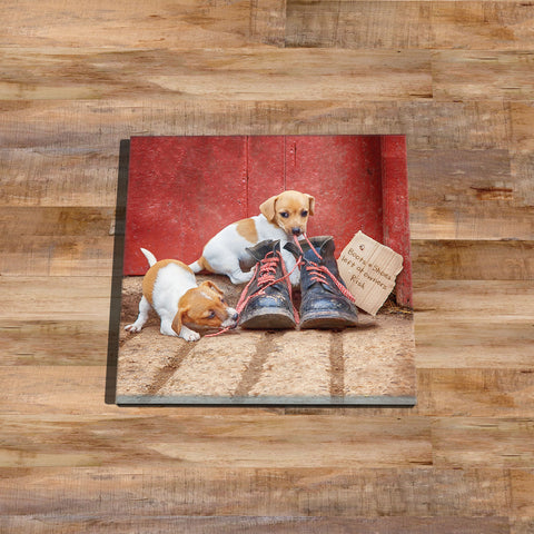 Jack russell puppies Glass drinks Coaster - New laces for old boots - Kitchy & Co