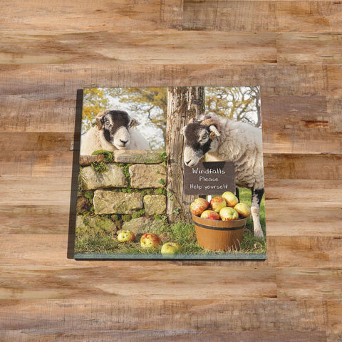 Swaledale sheep Glass drinks Coaster - Scrumping Apples - Kitchy & Co