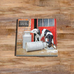 Dairy calves Glass drinks Coaster - Double trouble at the dairy - Kitchy & Co