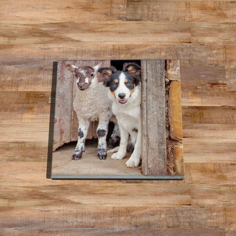 Tri Colour Border Collie Glass drinks Coaster - If your name's not down - Kitchy & Co