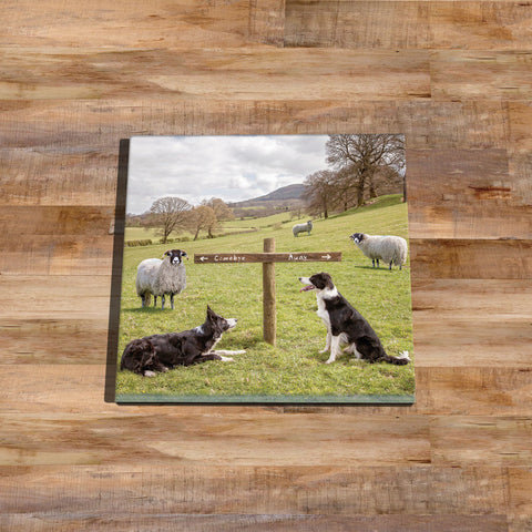 Sheepdog Glass drinks Coaster - Ewe take the Left - Kitchy & Co
