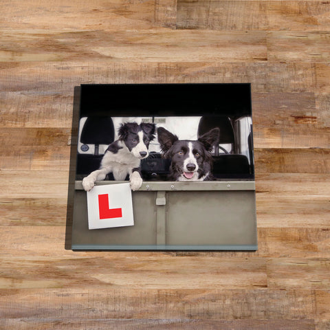 Sheepdog Glass drinks Coaster - Learner Driver - Kitchy & Co