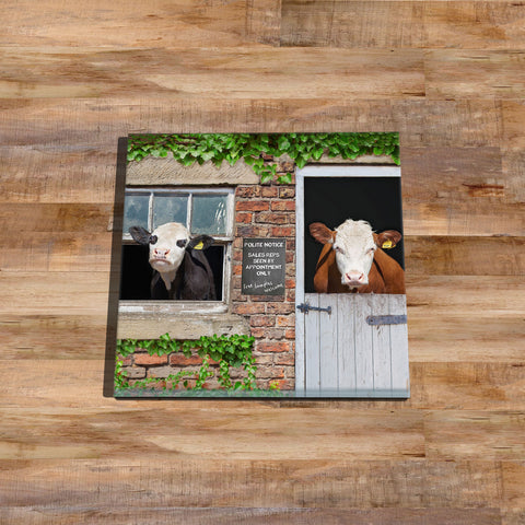 hereford cow glass coaster