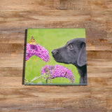 Labrador and Butterfly Glass drinks Coaster - Kitchy & Co
