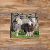 Herdwick sheep (B) Glass drinks Coaster - Why walk when Ewe can take the bus - Kitchy & Co