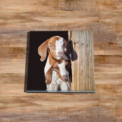 Goat kids Glass drinks Coaster - The adventure start here - Kitchy & Co