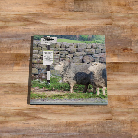 Herdwick sheep Glass drinks Coaster - Why walk when Ewe can take the bus - Kitchy & Co