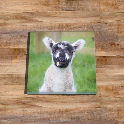 Cute lamb Glass drinks Coaster - I think we'll call her Daisy