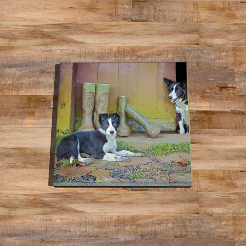 Border collie and wellies Glass drinks Coaster - No muddy feet - Kitchy & Co